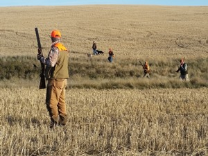Saskatchewan Upland Bird Hunting - High Prairie Outfitters